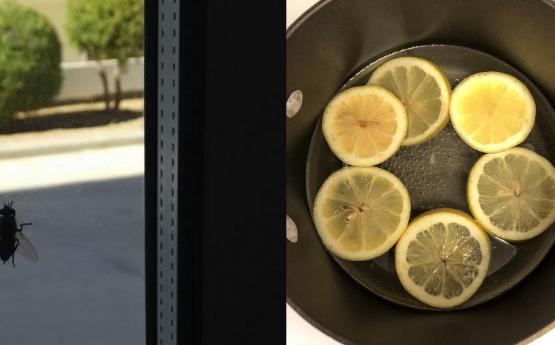 Կիտրոնով այս միջոցը կվերացնի ճանճերին, մոծակներին և թռչող այլ միջատներին և հանգիստ կարող եք պատուհանը բացել
