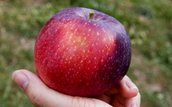 Ի՞նչ տեղի կունենա, եթե օրական մեկ հատ խնձոր ուտեք